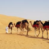 Camel Trekking in Dubai