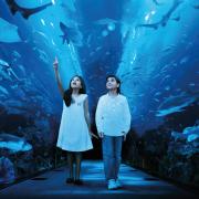 Dubai Mall Aquarium Attraction