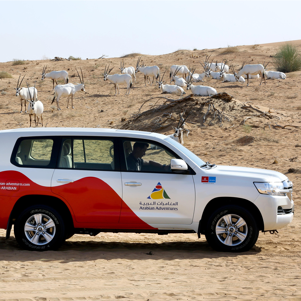 Morning Desert Safari Dune Drive in Dubai