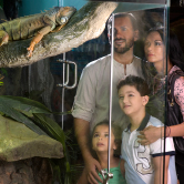 Dubai Mall Aquarium and Underwater Zoo, , small