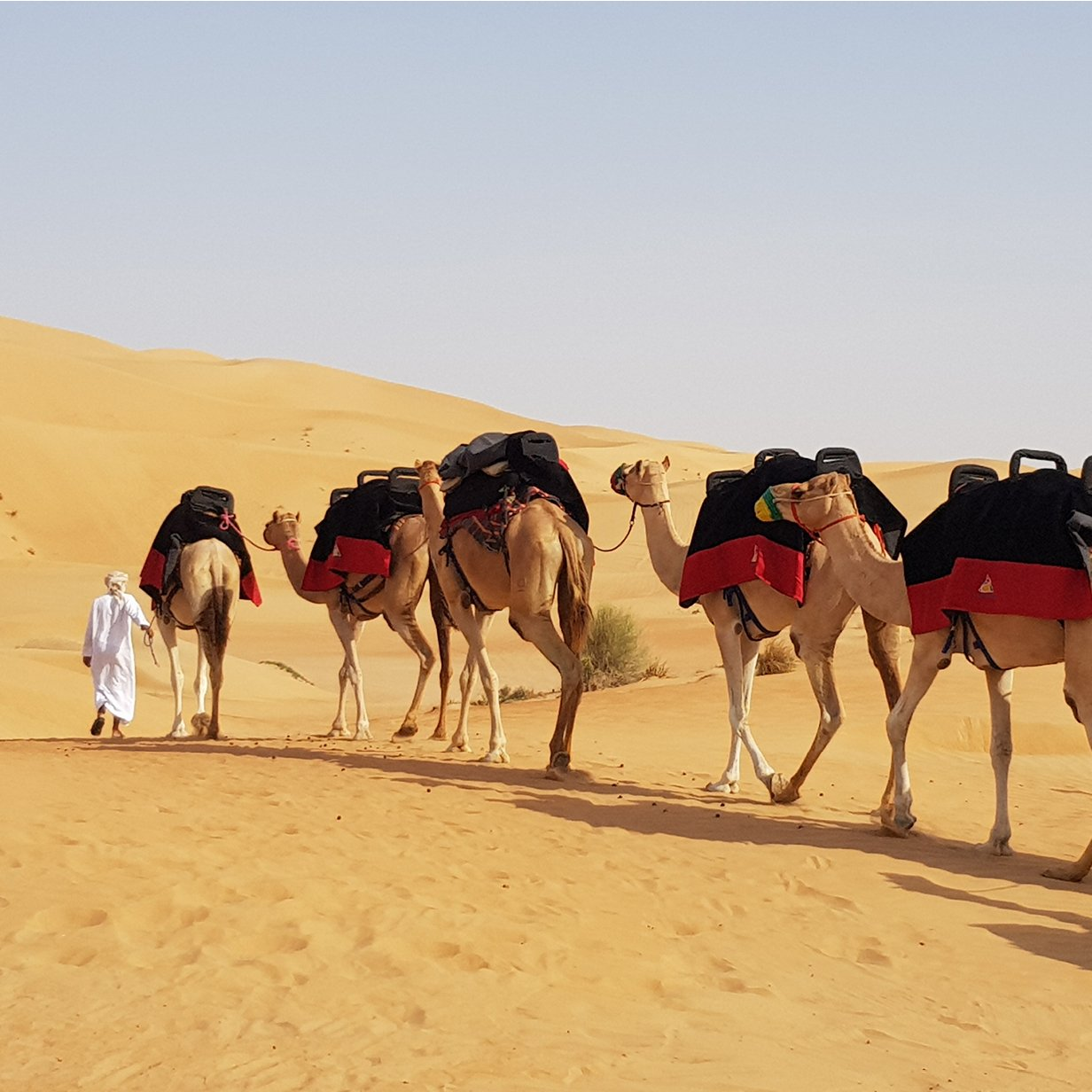 Morning Desert Safari Camel Trekking in Dubai