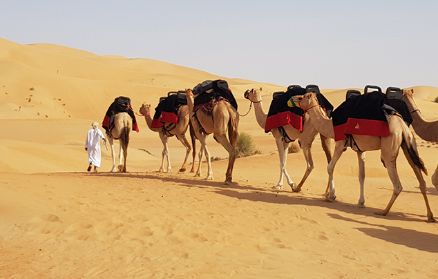 Morning Desert Safaris in Dubai