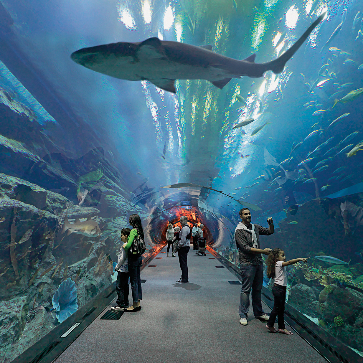 Dubai Mall Aquarium and Underwater Zoo, , large